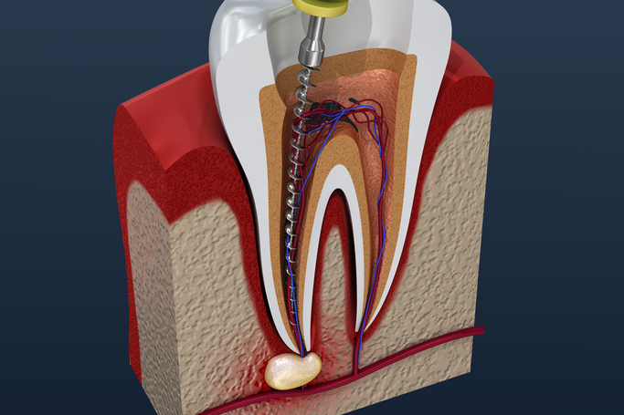 anatomia radici dentali
